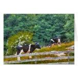 Vacas - MOO Felicitaciones