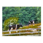 Vacas - MOO Tarjetas Postales