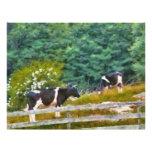 Vacas - MOO Tarjeton