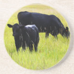 Vacas negras que pastan en campo de granja posavasos para bebidas