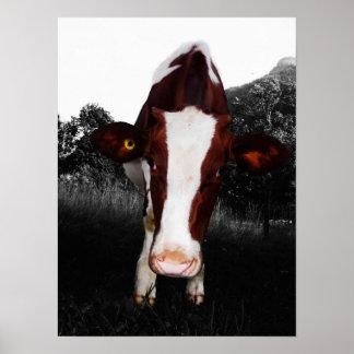 Vacas - no siempre blancos y negros póster