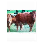 vacas postal