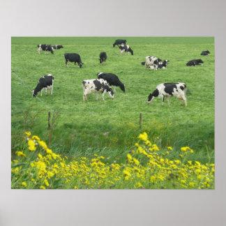 Vacas, prado y regalos de la impresión del poster