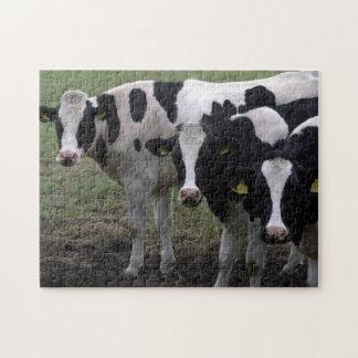 Vacas Puzzles Con Fotos
