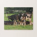 Vacas Puzzle Con Fotos
