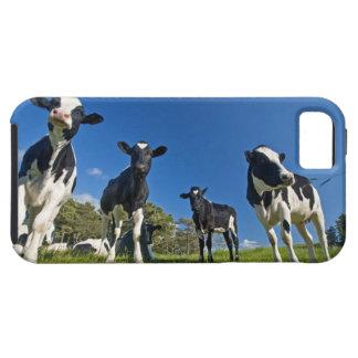 Vacas que alimentan en pasto iPhone 5 funda