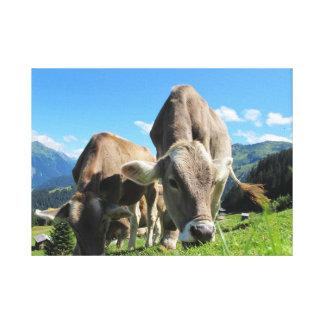 Vacas que comen la hierba impresión de lienzo