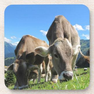 Vacas que comen la hierba posavasos