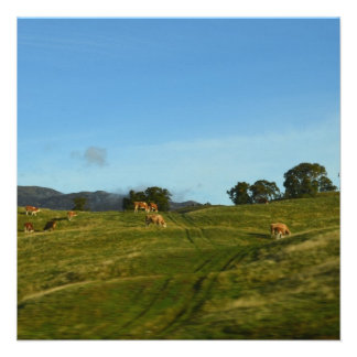 Vacas que pastan en Cairngorms Comunicado Personalizado