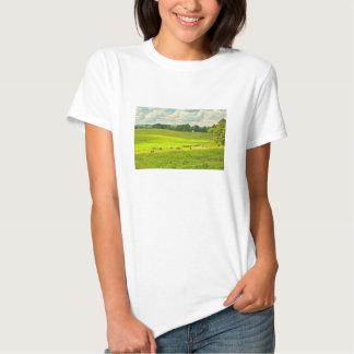 Vacas que pastan en hierba en campo de granja del poleras