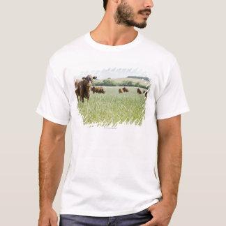 Vacas que se colocan en prado playera