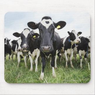 Vacas que se colocan en una fila que mira la cámar alfombrillas de ratones