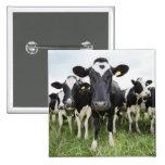 Vacas que se colocan en una fila que mira la cámar pin