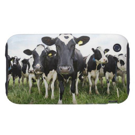 Vacas que se colocan en una fila que mira la funda though para iPhone 3