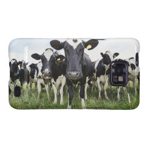Vacas que se colocan en una fila que mira la galaxy s2 fundas