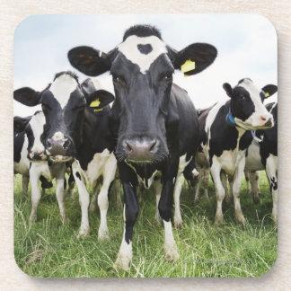 Vacas que se colocan en una fila que mira la posavaso