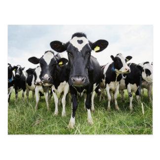 Vacas que se colocan en una fila que mira la postal