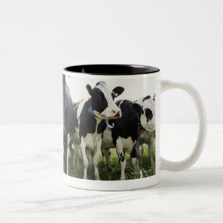 Vacas que se colocan en una fila que mira la taza de dos tonos