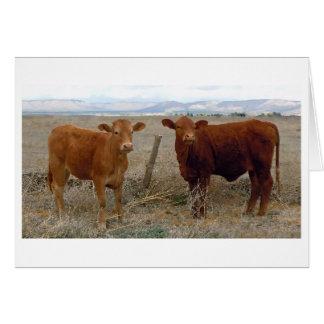 Vacas rojas jovenes lindas - espacio en blanco tarjeta de felicitación