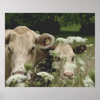 Vacas sospechosas póster