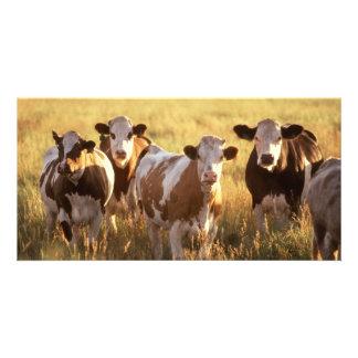 Vacas Tarjeta Personal Con Foto