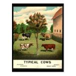 Vacas típicas postal