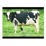 vacas y gatos kermoisan 012 postal