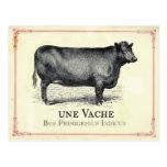 Vache Cow Postcard