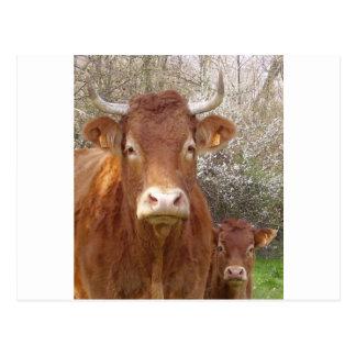 Vache del La y veau del hijo Tarjeta Postal