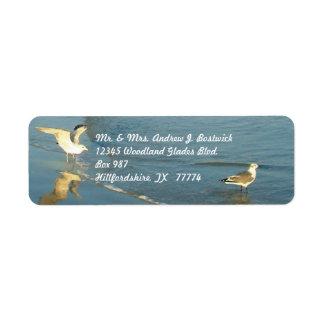 Vadear etiquetas de dirección de las gaviotas