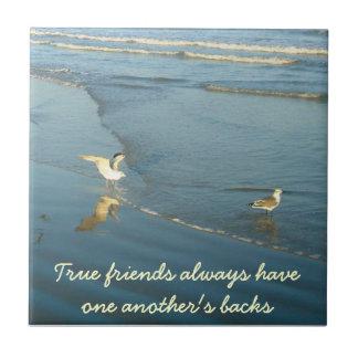 Vadear la teja de la amistad de las gaviotas