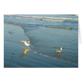 Vadear tarjetas de nota en blanco de las gaviotas