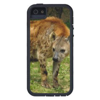 Vagabundeo del Hyena iPhone 5 Protectores