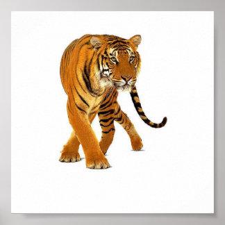 Vagabundeo del tigre posters