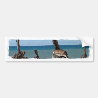 Vagos de la playa del pelícano pegatina para auto