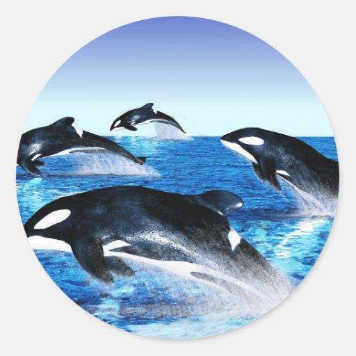 Vaina de la orca pegatinas redondas