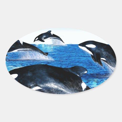 Vaina de la orca calcomanía ovalada