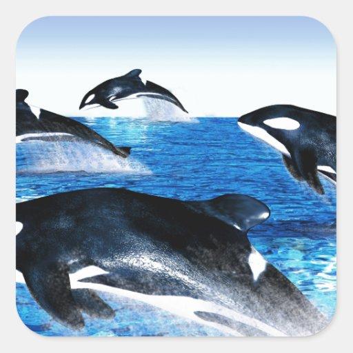 Vaina de la orca pegatina cuadradas