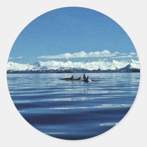 Vaina de la orca etiquetas redondas