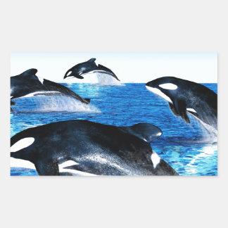 Vaina de la orca pegatina rectangular