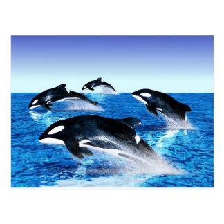 Vaina de la orca tarjetas postales