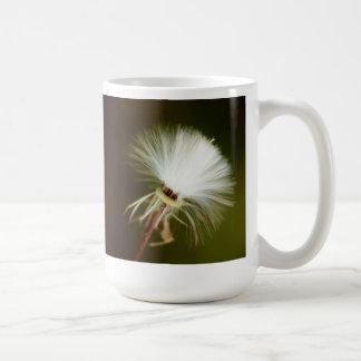 Vaina de la semilla del cardo de cerda taza de café