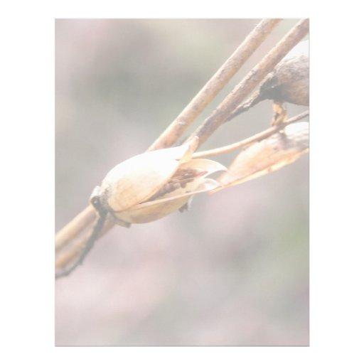 Vaina de la semilla - nicociana plantilla de membrete