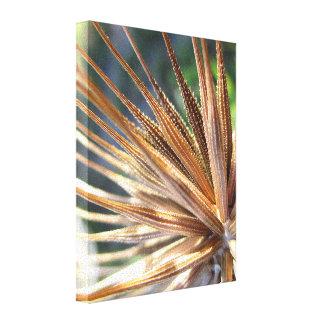 Vaina de punta de la semilla del salsifí impresión en lona