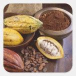 Vaina del cacao que contiene las habas del cacao pegatina cuadrada