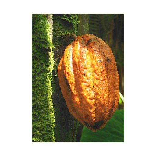 Vaina hawaiana del cacao lona envuelta para galerias