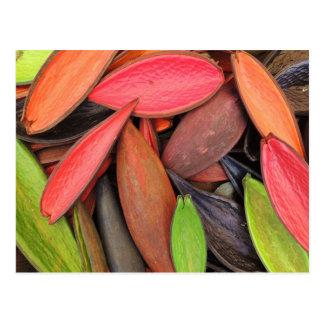 Vainas coloridas de la semilla de la cosecha de la postal
