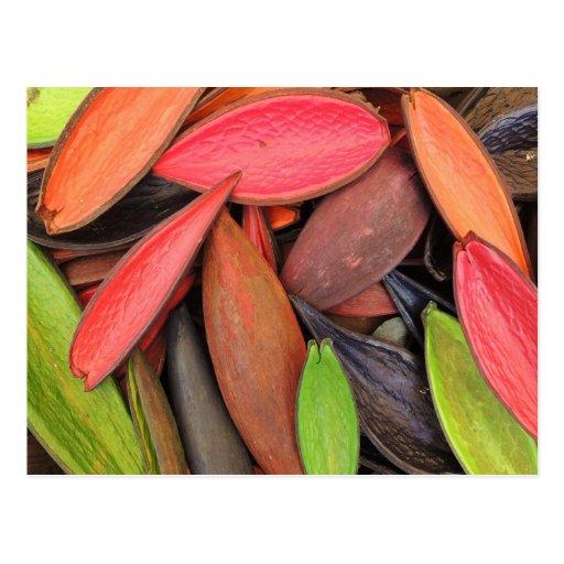 Vainas coloridas de la semilla de la cosecha de la tarjetas postales