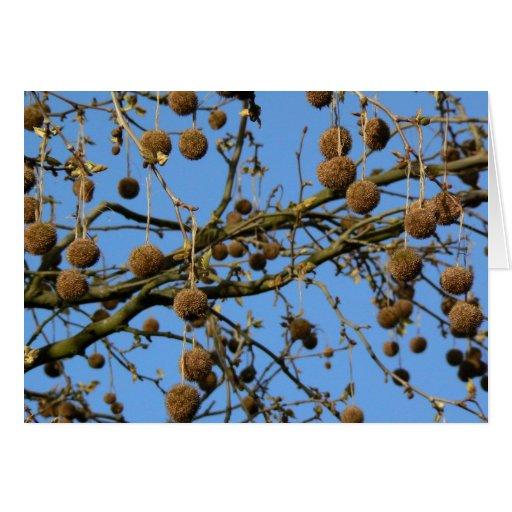 Vainas de la semilla - árbol plano de Londres Tarjeta Pequeña