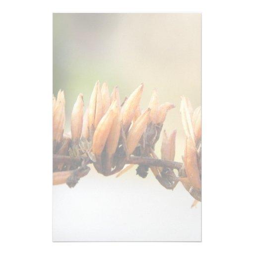 Vainas de la semilla - mariposa Bush Papeleria De Diseño
